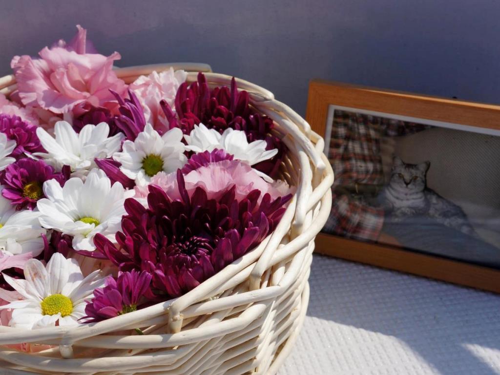 花かごとペットの遺影
