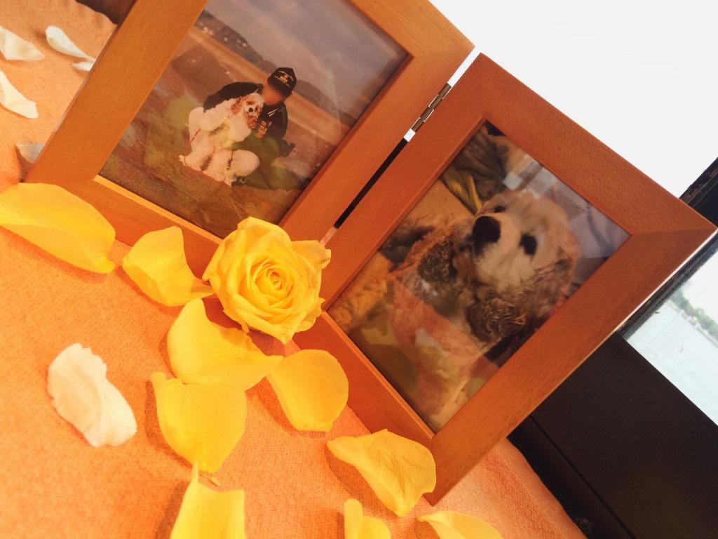 黄色いバラとペットと飼い主の遺影