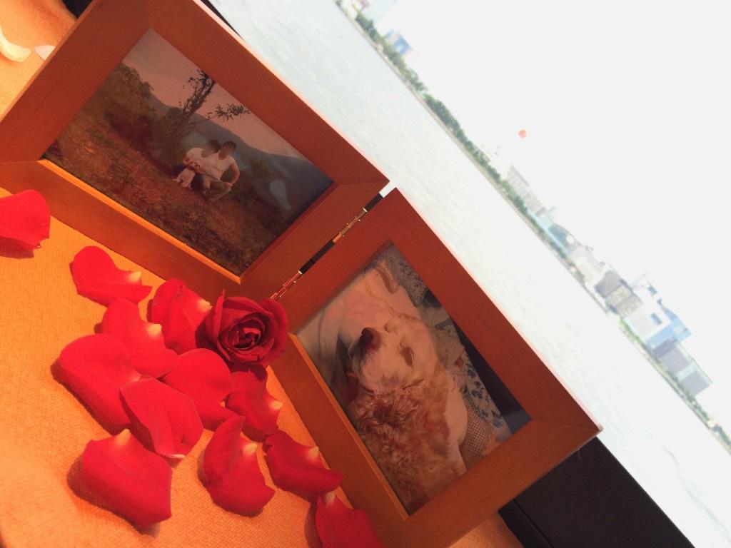 赤いバラとペットと飼い主の遺影