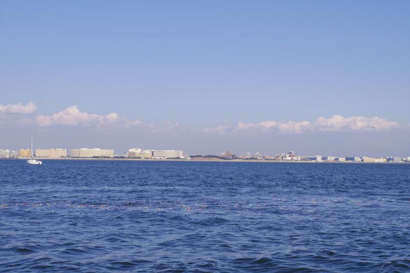 8.東京湾に広がる花々
