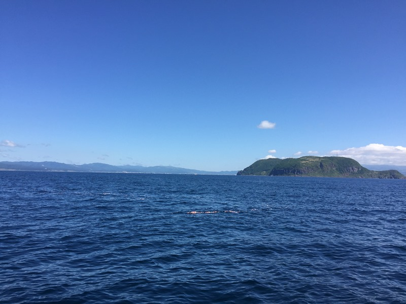 10.帰航、カモメに見守られて船は旋回