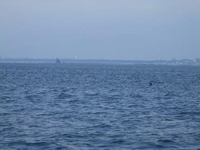 3.遠くに烏帽子岩の見える海域