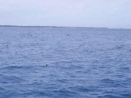 7.故人様が選ばれた石垣島、竹富島の海