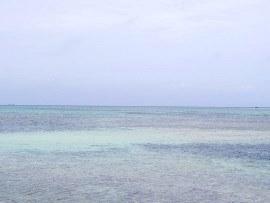 8.故人様の愛した珊瑚礁の海