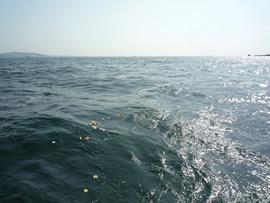 4.陽射しを受ける海に浮かぶ花びら