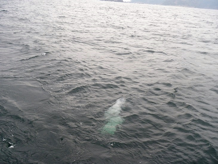 4.深い色の海はとても澄んでいました