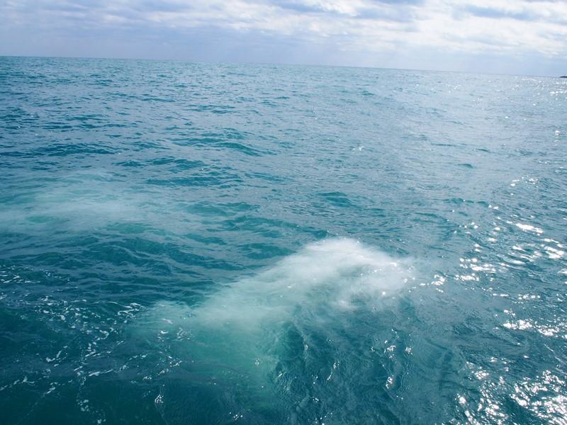 12.澄んだ海へ広がる遺骨