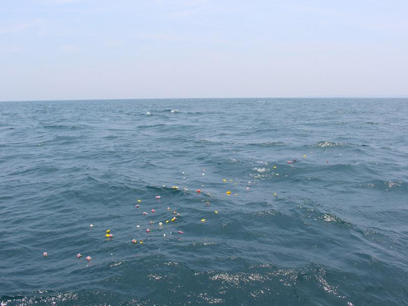 6.力強い波が花びらを遠くへ