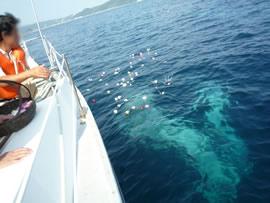 6.青く澄んだ海へゆっくりと広がる