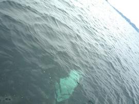7.深く透明な海へ溶けていきます