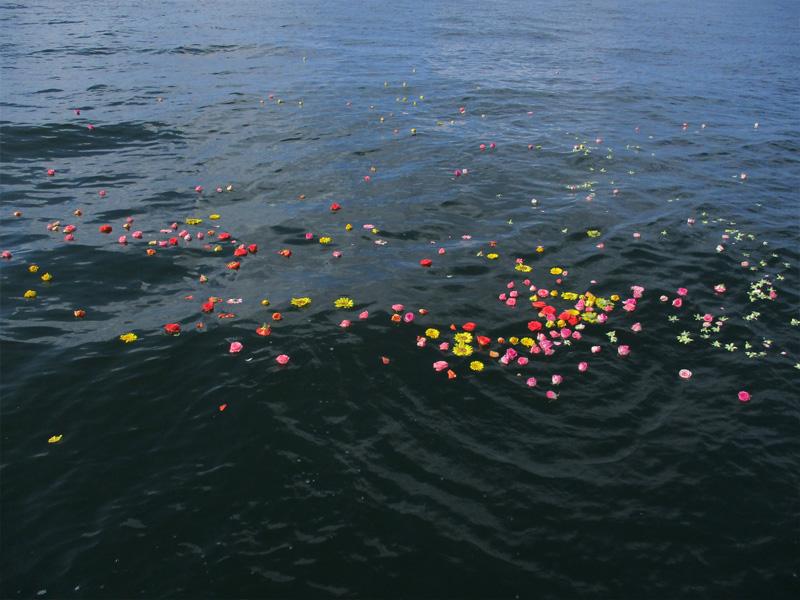 3.明るい色を集めた花びら