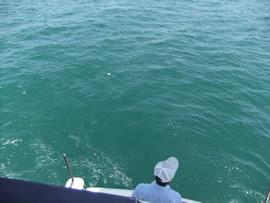 8.深く澄んだ和歌浦沖
