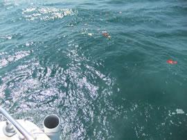 5.キラキラと光る和歌浦の海